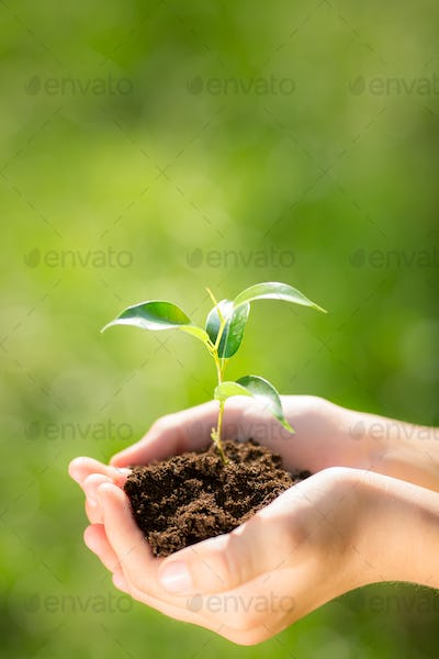 Child holding young plant in hands
