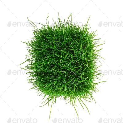 Juicy young green grass isolated on white background. Top view