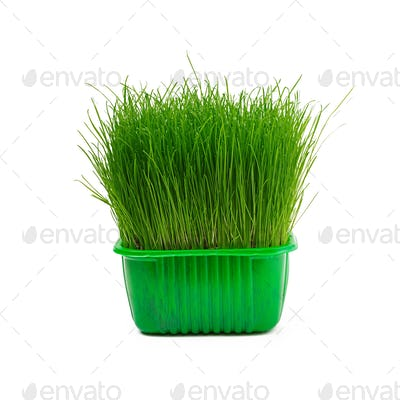Juicy young green grass isolated on white background