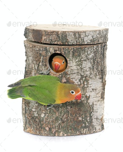 bird nest box and lovebird