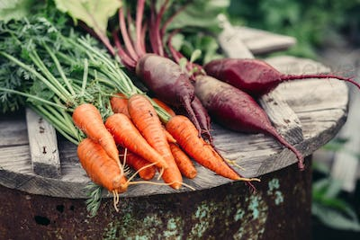 Fresh vegetables, carrots and beets.