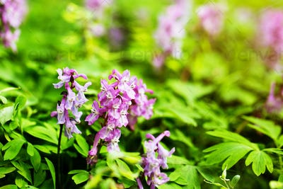 purple flowers in wild nature