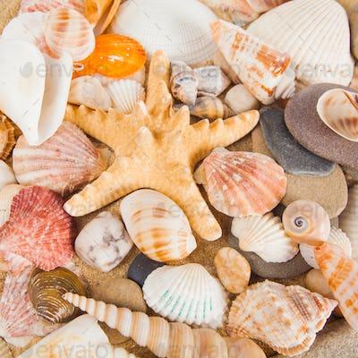 variety of sea shells