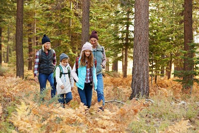 Family hiking through forest, California, USA