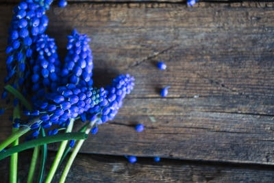 Blue spring flowers on a wooden background