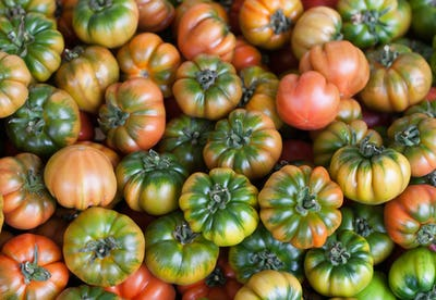 Fresh Italian Costoluto tomatoes on display at an outdoors farme