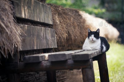 cat chilling on the porch