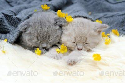 Kitten on white blanket