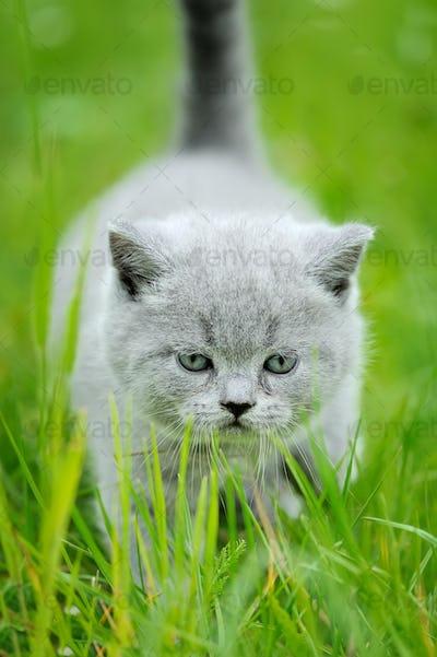 Cute kitten in the green grass