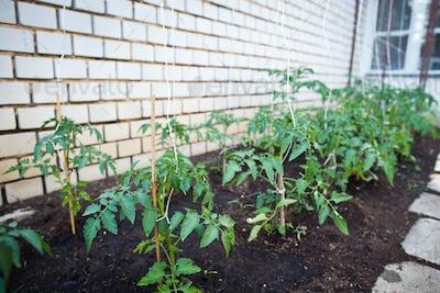 ittle organic/bio/permaculture garden