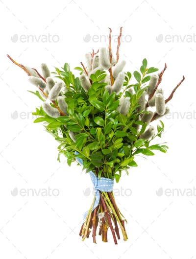 Pussy willow bunch for Palm Sunday