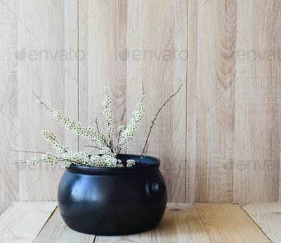 East Asian concept, white blooming branch on wooden background