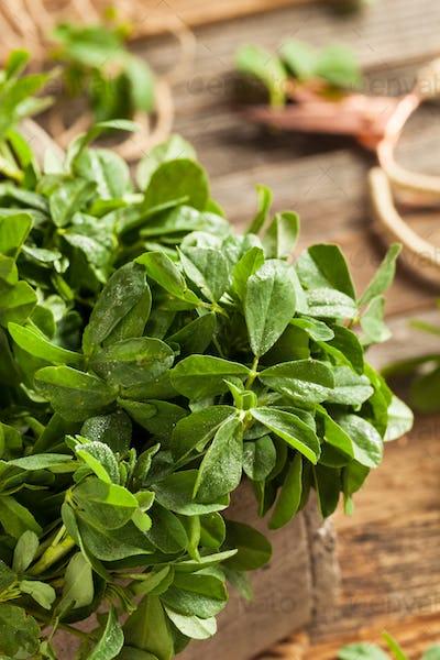 Raw Organic Fenugreek Methi Leaves