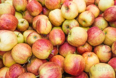 fresh red and yellow apples.  Group of apples