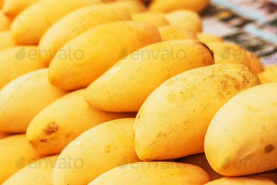 Ripe mangoes placed in a row