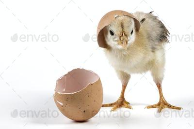 Brocken Egg Shell