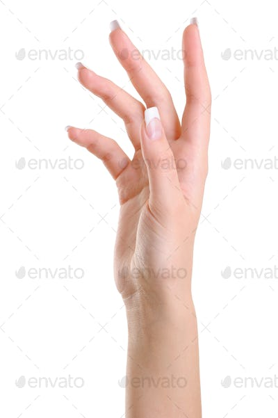 One elegant female hand with beauty  fingers