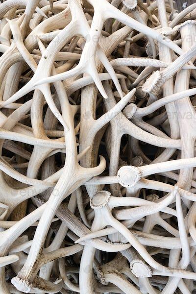 Ivory Pile Elk Antlers Animal Horns Art Installation