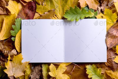 Autumn leaf composition, greeting card. Studio shot, wooden back