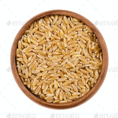 Kamut Khorasan wheat in a bowl over white