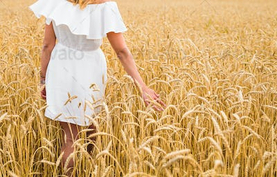 Woman's hand touch wheat ears close-up