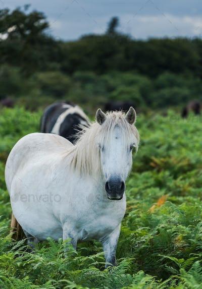 white pony horse in fern field