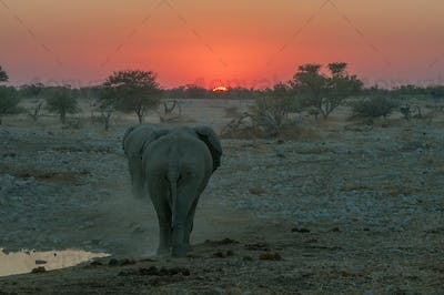 Fiery sunset with elephants walking into the sunset