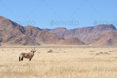 Oryx in grass and mountain landscape