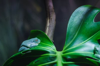 a frog on a branch