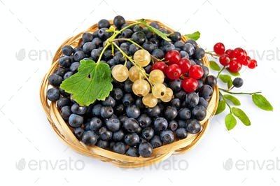 Blueberries with red and white currants