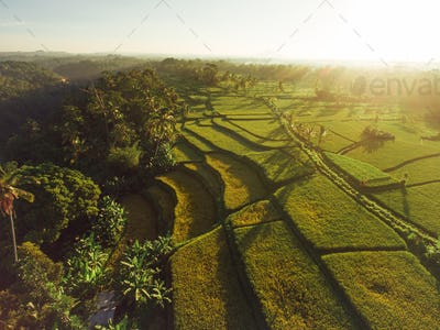 Scenic view of terraced rice fields