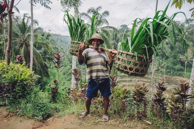 Old farmer carrying a yoke on his shoulders