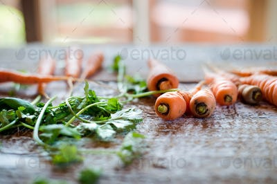 Fresh carrot with leaves laid on white wooden table