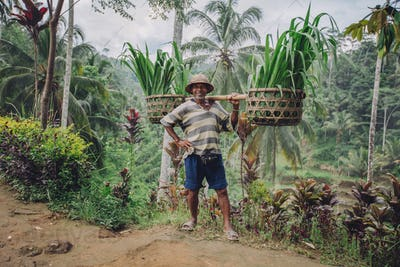 Confident old farmer carrying seedlings on his shoulders