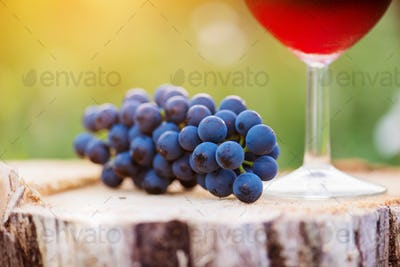 Red wine and blue grapes laid on wooden stump