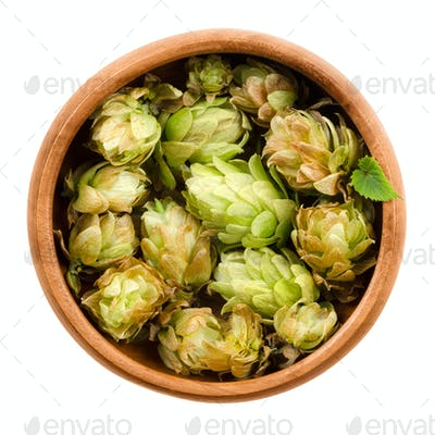 Hops in wooden bowl on white background