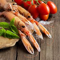 Raw langoustine on ice with tomatoes and basil