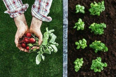 Organic farming and gardening