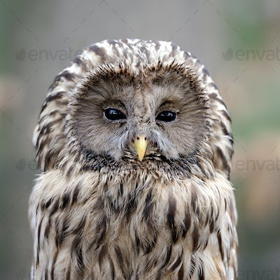 Owl sitting on a branch