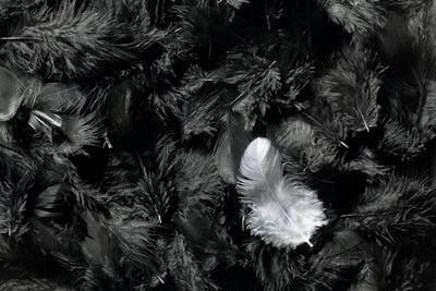 white and black feathers