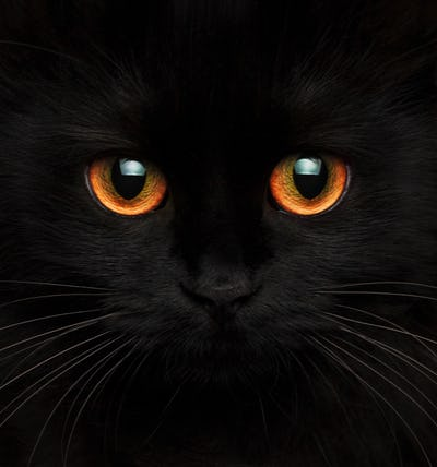 Cute muzzle of a black cat with red eyes