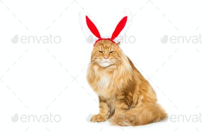 Big ginger cat in christmas rabbit ears head rim