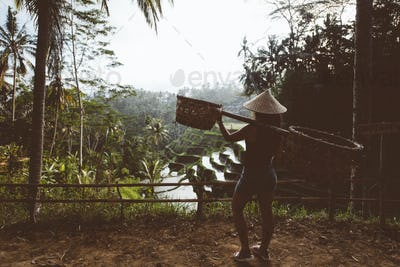 agriculture woman carrying tools on rice terraces in Ubud Village, Bali, Indonesia. Rice terraces