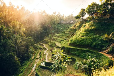 Beautiful landscape with rice terraces in famous tourist area