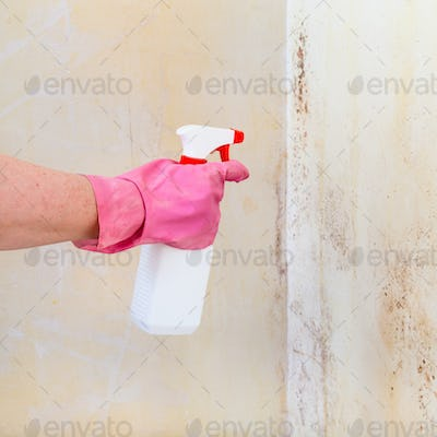 removing of mold from wall with liquid spray