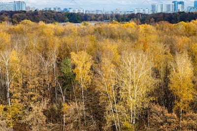 edge of forest and city on horizon in autumn