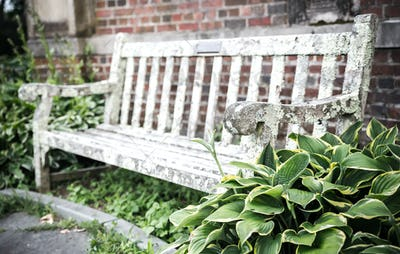 Old bench in summer park
