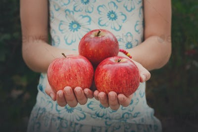 Girl holds red apples in hands, handful at torso background