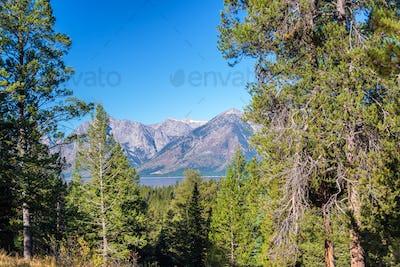 Teton Range and Trees