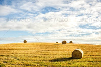 agricultural field and blue sky